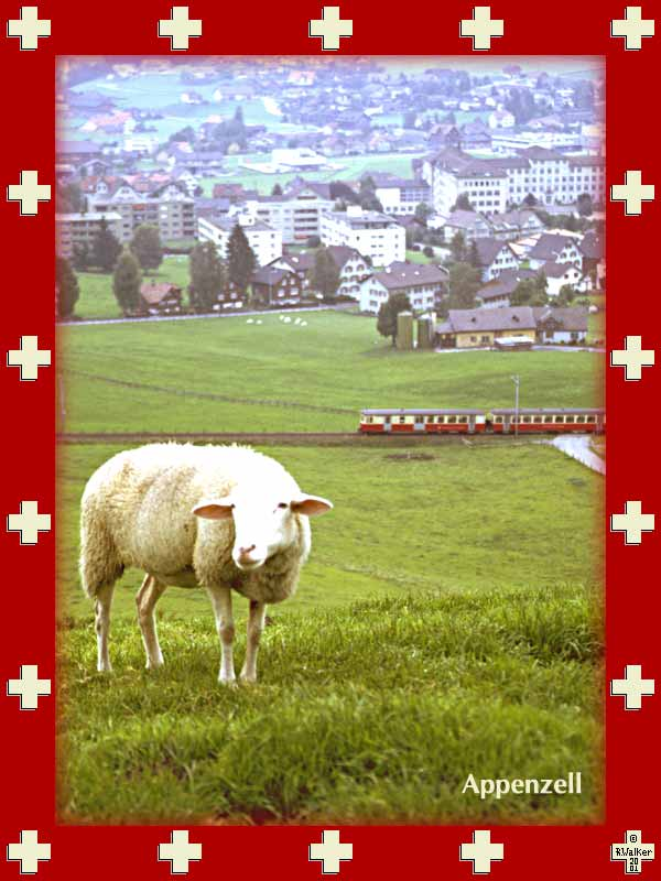 Sheep in Appenzell, with the Appenzeller Bahn in the background and the town of Appenzell (known for not allowing women to vote until recently) beyond that.